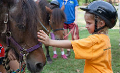 small girl petting a small horse